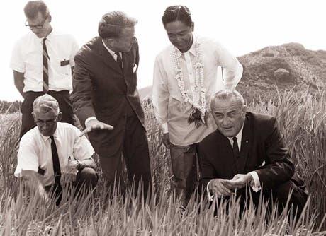 Una delegación estadounidense mostrando un cultivo de arroz mejorado