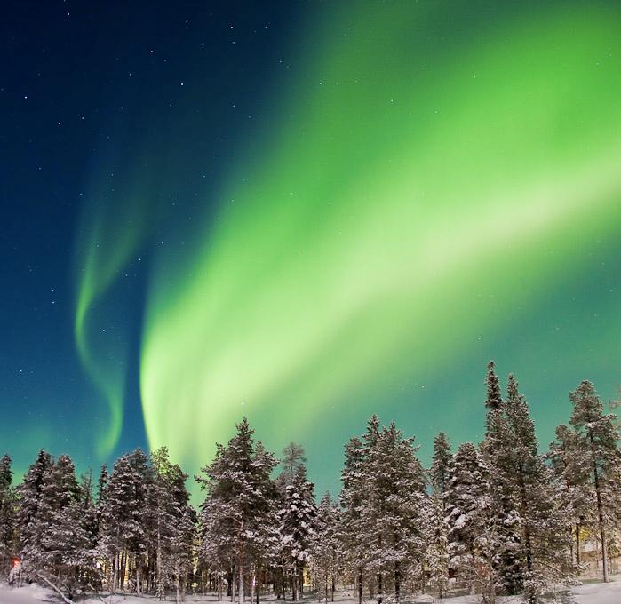 Bosque y Aurora Polar