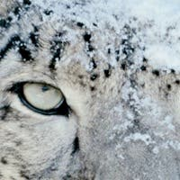 Lo mejor de Internet | Come con la cubertería del Titanic y adquiere de forma gratuita Snow Leopard