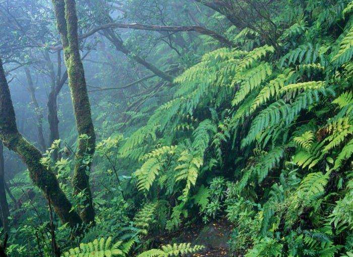 Parque Nacional del Garajonay