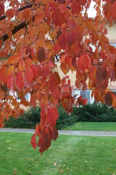 Fotografiando el otoño sueco