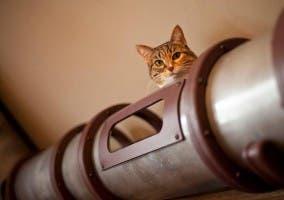 Tunel decorativo para que juegue un gato