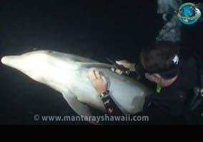 Submarinista liberando un delfín