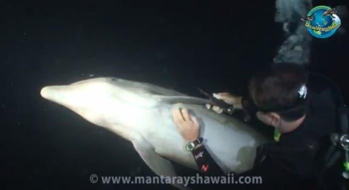 anzuelo liberado cetáceo