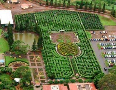 Laberinto más grande del mundo en Hawaii