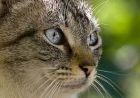 Retrato gato dejando espacio libre hacia donde mira