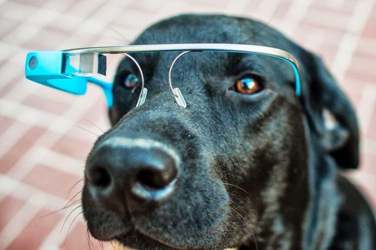 Google Glass para perros