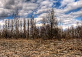 Árboles cerca de Chernobyl