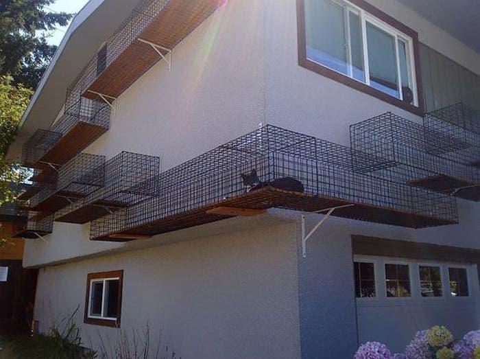 Los gatos pasean por la fachada