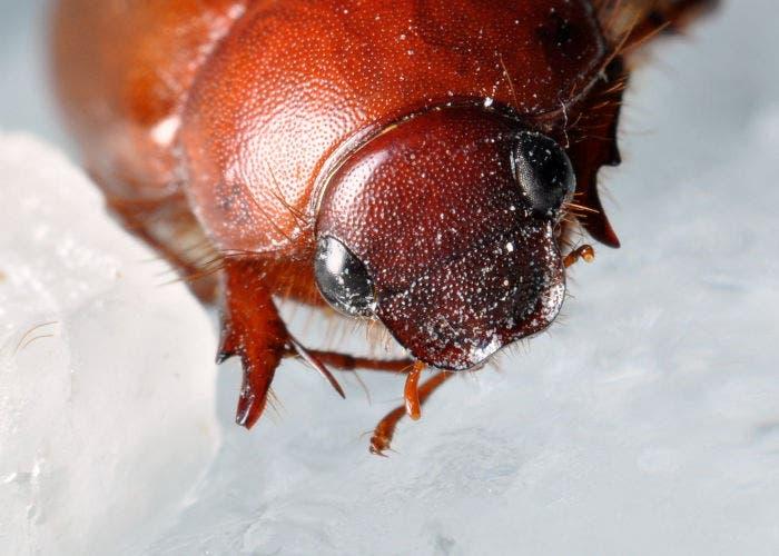 Insecto sobre hielo