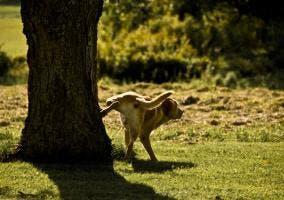 Perro orinando en un árbol