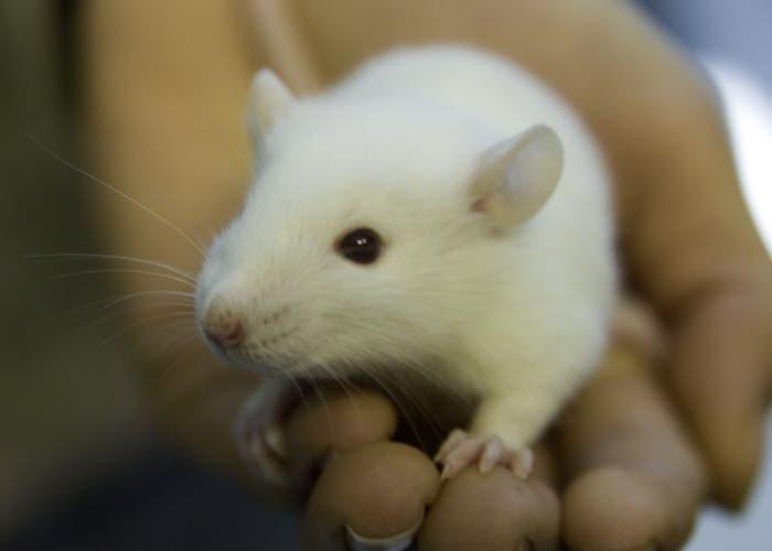 Ratón sostenido en una mano