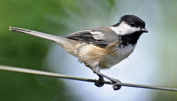 Imagen de un pájaro en un alambre