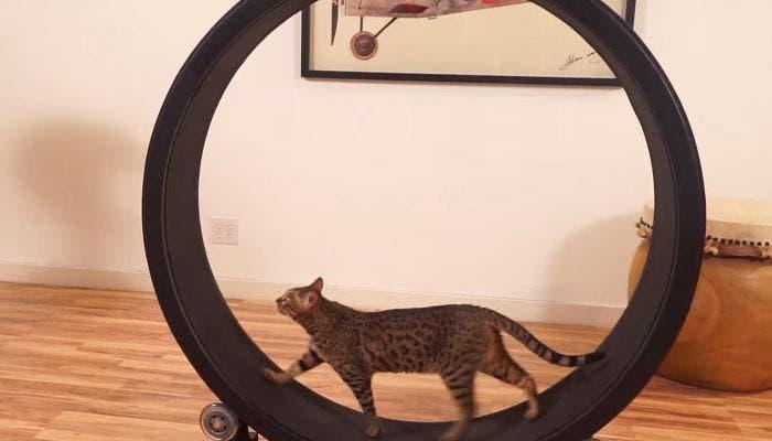 Rueda de correr para gatos