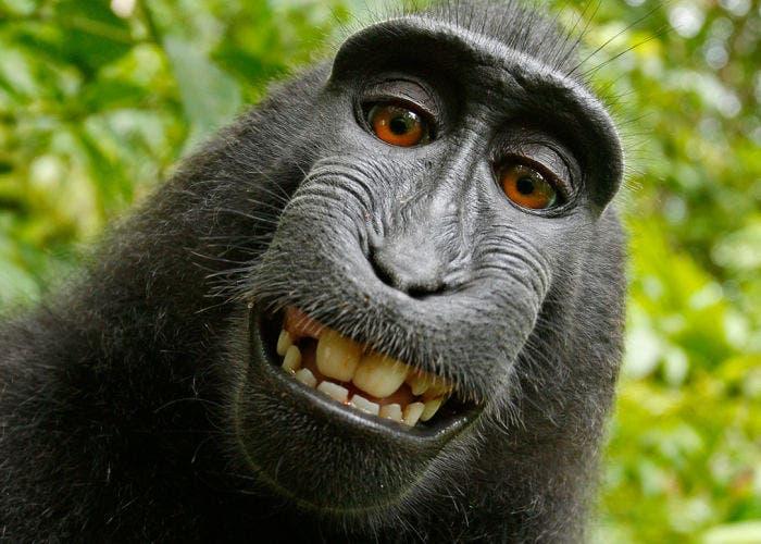 Selfie_macaco