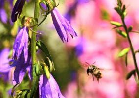 Abeja junto a una flor