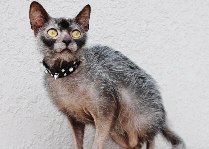 Gato licántropo