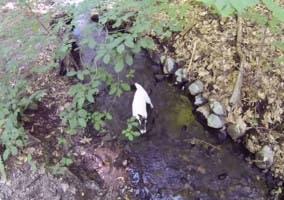 Perro grabado con una GoPro