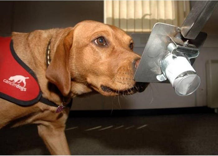 perro cáncer