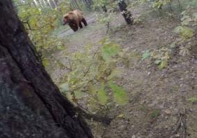 Huida de un oso