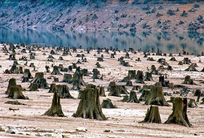 Bosque devastado