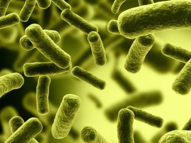 bacterias1_0