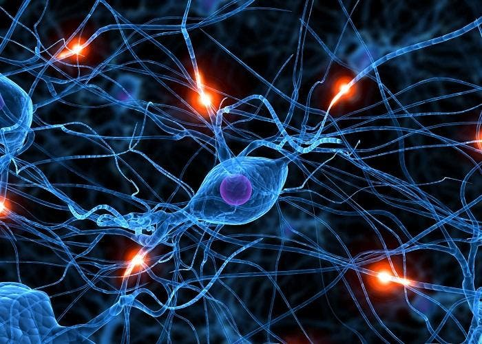 red_neuronal