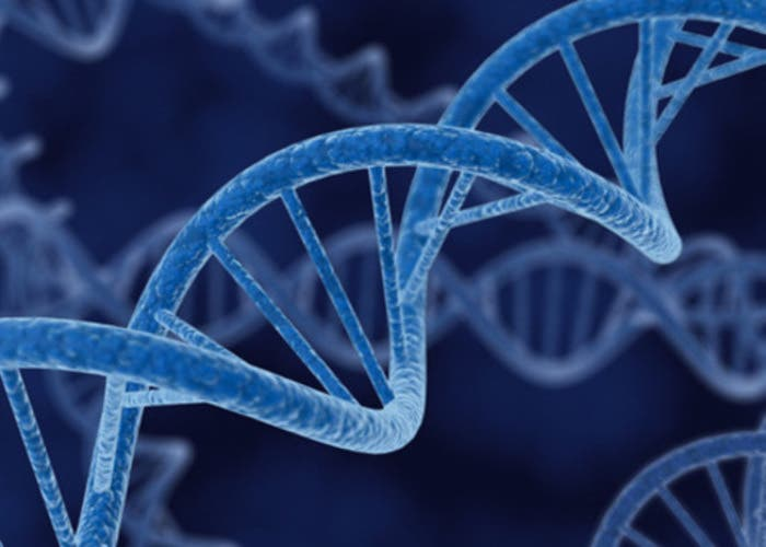 ADN microRNA
