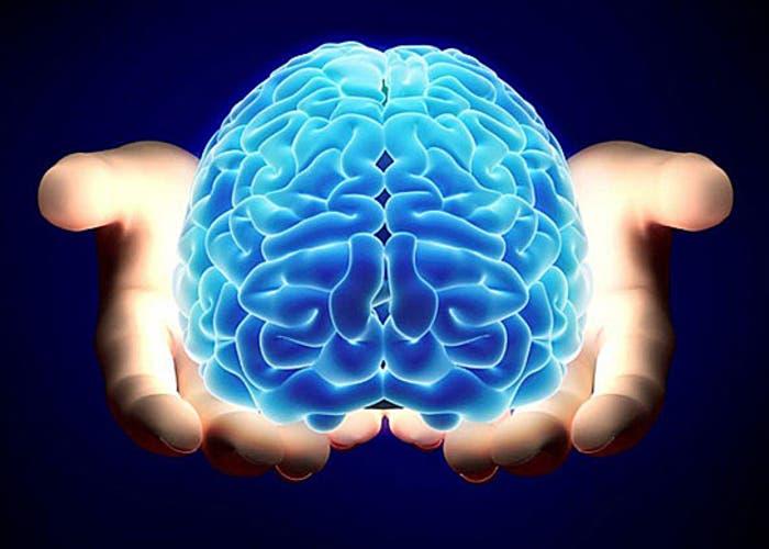 Poseemos un cerebro en el estomago