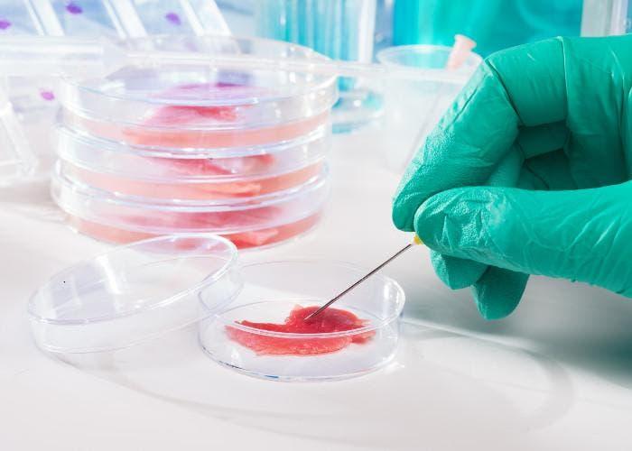 Carne de laboratorio