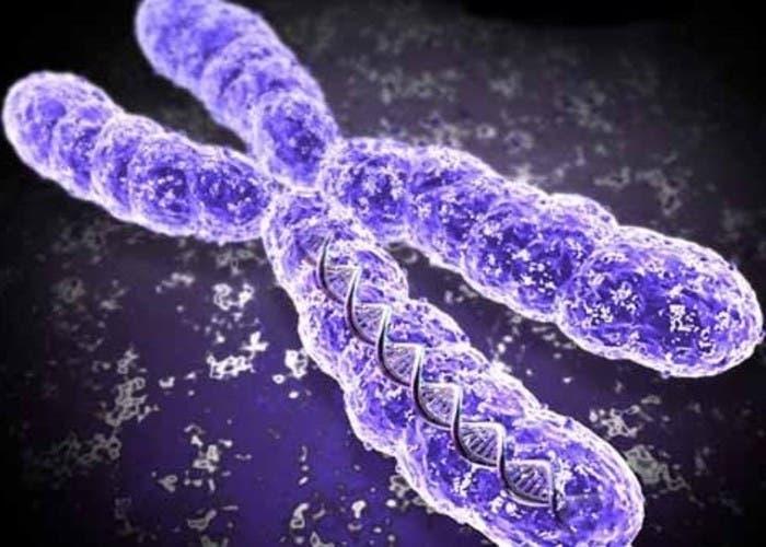CRISPR ADN