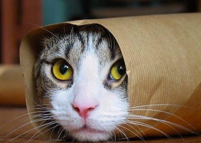 Los gatos también se unen a la lucha contra el terrorismo