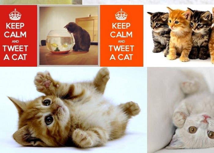 Y Twitter se llenó de gatitos