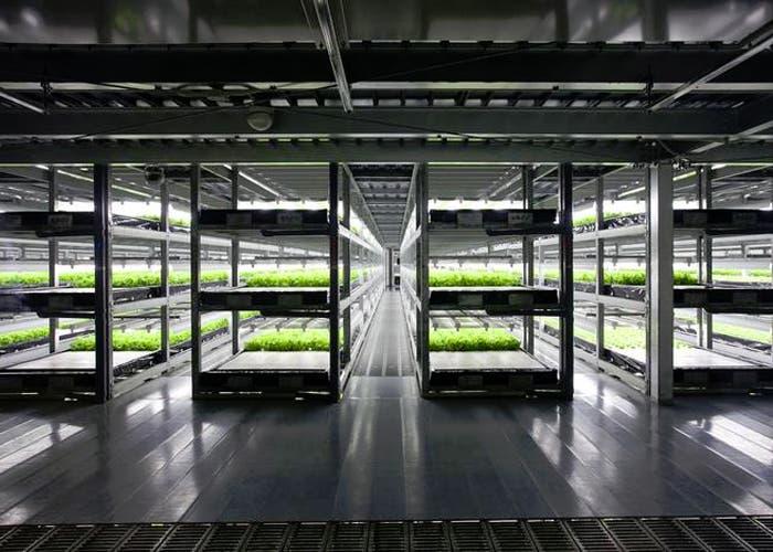 Cultivos en una granja robotizada