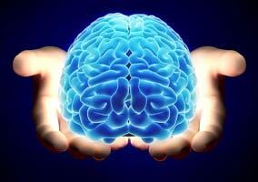 Poseemos-un-cerebro-en-el-estomago