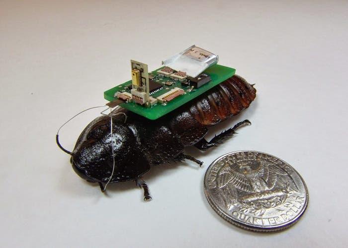 Biobot escarabajo