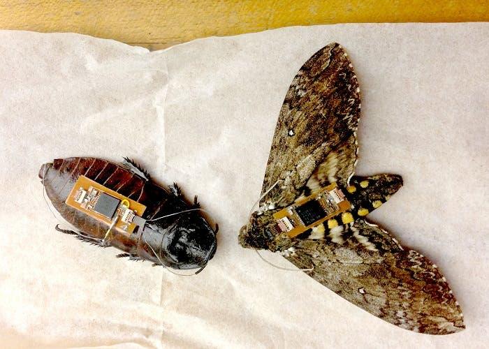 Biobot escarabajo y mariposa