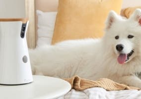 perro cámara furbo