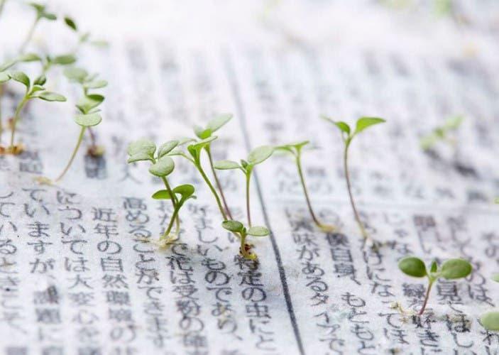 periodico-semillas