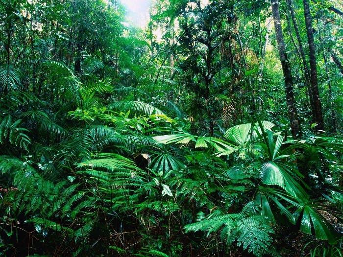 Las plantas están trabajando más a causa del CO2
