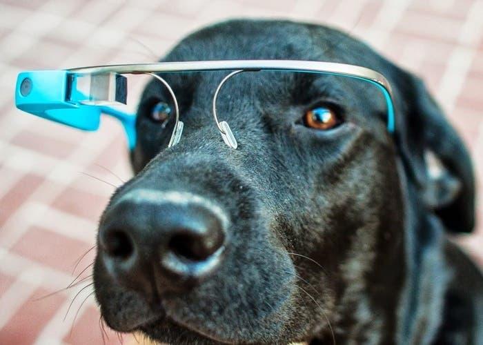 Esto es lo que ve un perro cuando observa la televisión