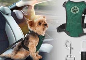 Cinturón para perro