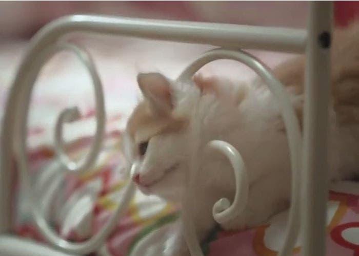 Gatos sueltos en IKEA